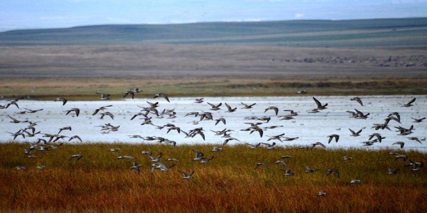 Kuyucuk Gölü 250 tür kuşa ev sahipliği yapıyor