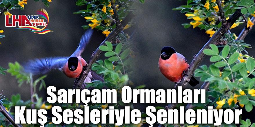 Sarıçam Ormanları Kuş Sesleriyle Şenleniyor