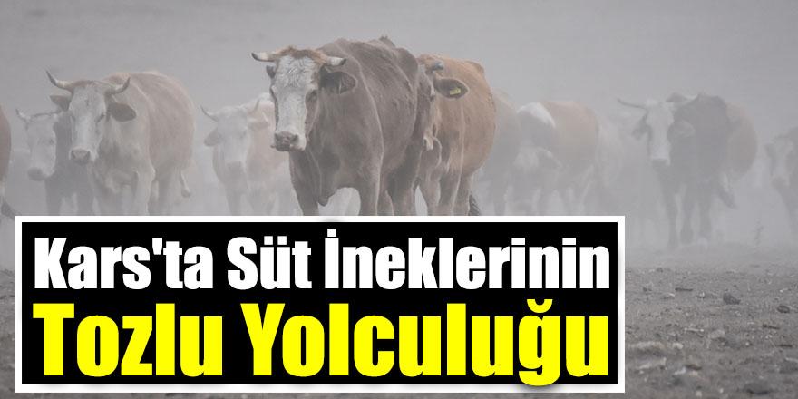 Kars'ta Süt İneklerinin Tozlu Yolculuğu