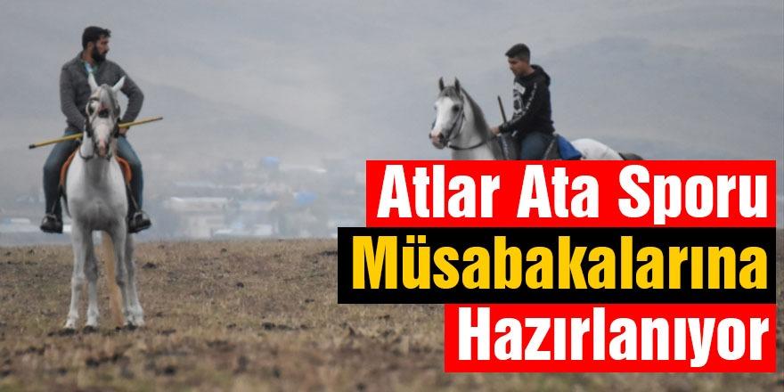 Atlar Ata Sporu Müsabakalarına Hazırlanıyor