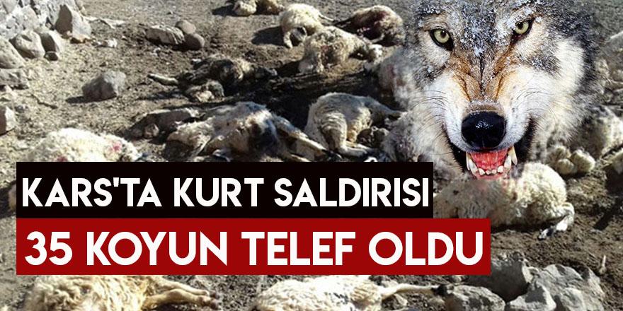 Kars'ta Kurt Saldırısı 35 Koyun Telef Oldu