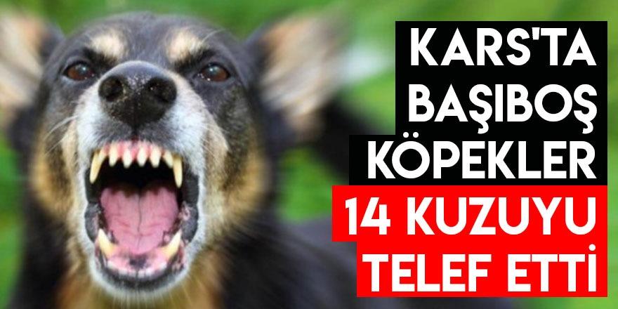 Kars'ta Başıboş Köpekler 14 Kuzuyu Telef Etti