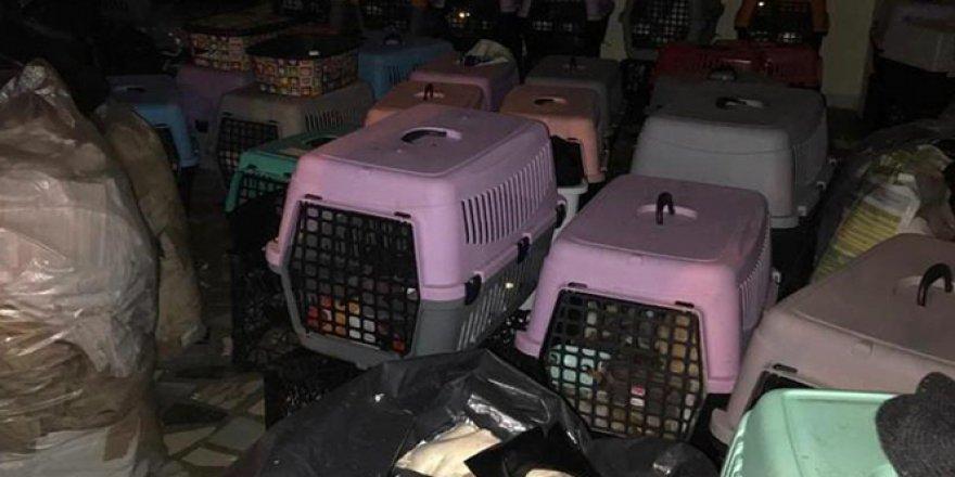 Şişli'de baskın yapılan adreste 9'u yavru 57 kedi bulundu
