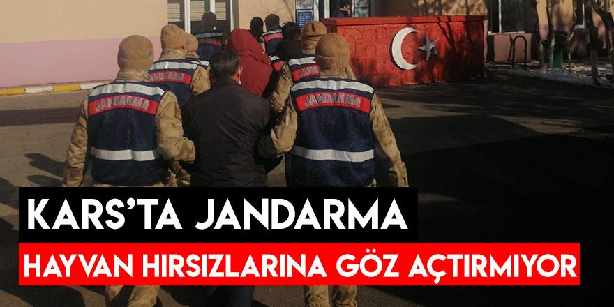 Kars'ta Jandarma Hayvan Hırsızlarına Göz Açtırmıyor