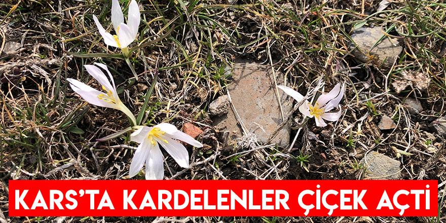 Kars'ta Kardelenler Çiçek Açtı