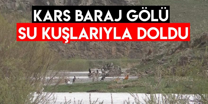 Kars Baraj Gölü Su Kuşlarıyla Doldu