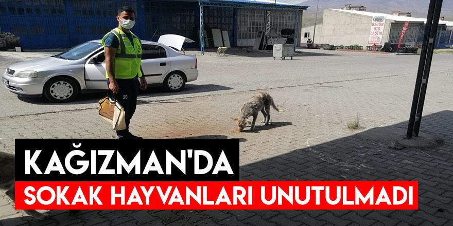Kağızman'da Sokak Hayvanları Unutulmadı