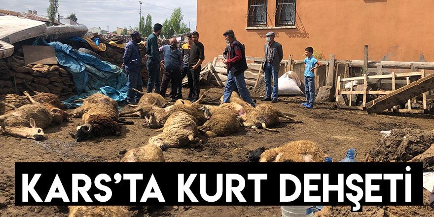 Kars'ta Kurt Dehşeti
