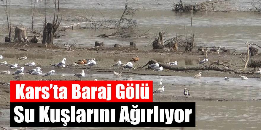 Kars'ta Baraj Gölü Su Kuşlarını Ağırlıyor