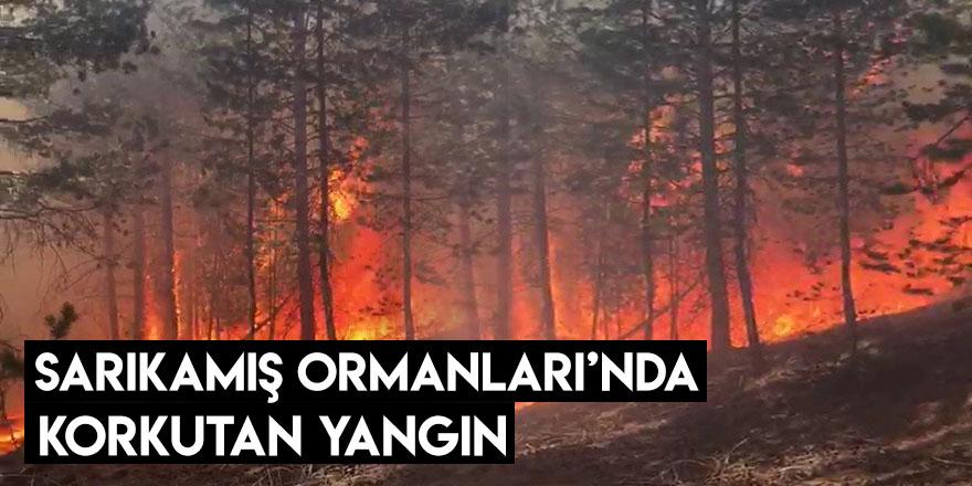 Sarıkamış Ormanları'nda Korkutan Yangın