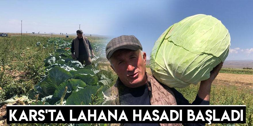 Kars'ta Lahana Hasadı Başladı