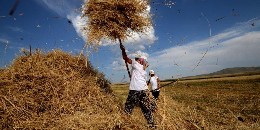 Kars'ta çiftçilerin hasat heyecanı başladı