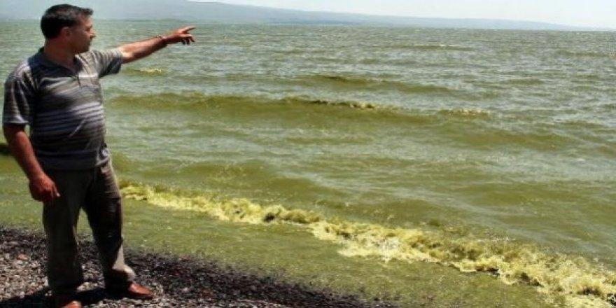 Çıldır Gölü suyu yeşillendi