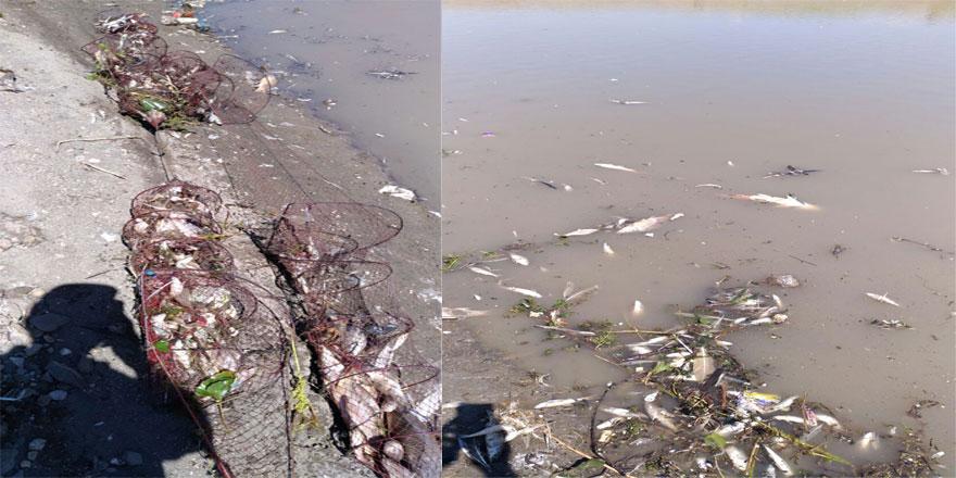 Arpaçay baraj gölünde balık ölümü