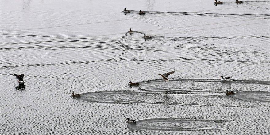 Buzu çözülen Ördek Gölü misafirlerini ağırlamaya başladı