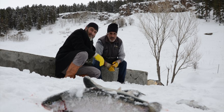 Kültür Balıkçısının Yüzü Gülüyor