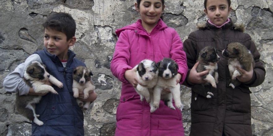 """""""Minik yürekler"""" yavru köpekleri sahiplendi"""