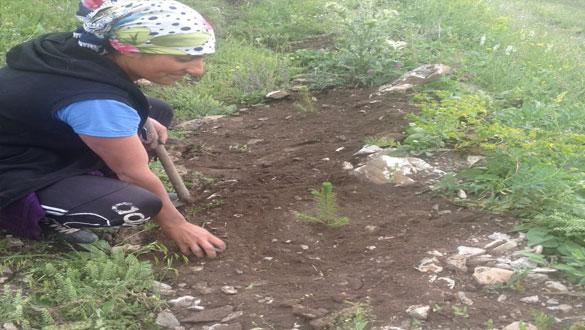 Akyaka'da Fidanlara Kadın Eli