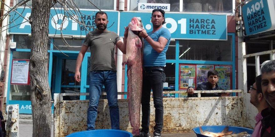 Kars'ta Dev Yayın Balığı Oltaya Takıldı