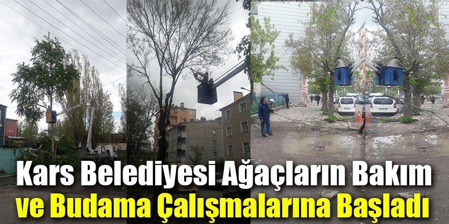 Kars'ta Şehir Merkezindeki Ağaçların Bakım Ve Budama Çalışmalarına Başladı.