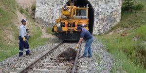 Kars'ta Tren Kazası 20 Büyükbaş Hayvan Telef Oldu