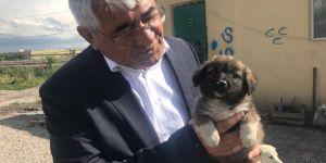 Kars Belediyesi Modern Hayvan Kliniği Çalışmalarına Başladı
