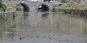 Yaban ördekleri Kars'ı mesken tuttu
