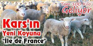 """Kars'ın Yeni Koyunu """"İle de France"""""""