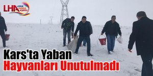 Kars'ta Yaban Hayvanları Unutulmadı