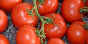 Rusya Türkiye'den daha fazla domates almak istiyor