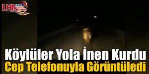 Köylüler Yola İnen Kurdu Cep Telefonuyla Görüntüledi