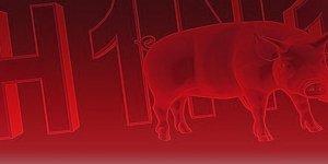 Hindistan'da domuz gribi salgını: 169 ölü