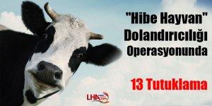 """""""Hibe hayvan"""" dolandırıcılığı operasyonunda 13 tutuklama"""