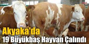 Akyaka'da 19 Büyükbaş Hayvan Çalındı