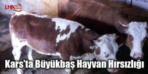 Kars'ta Büyükbaş Hayvan Hırsızlığı