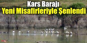 Kars Barajı Yeni Misafirleriyle Şenlendi
