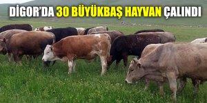 Digor'da 30 Büyükbaş Hayvan Çalındı