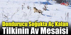 Dondurucu Soğukta Aç Kalan Tilkinin Av Mesaisi