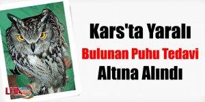 Kars'ta Yaralı Bulunan Puhu Tedavi Altına Alındı