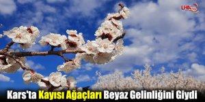 Kars'ta Kayısı Ağaçları Beyaz Gelinliğini Giydi