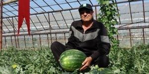 Antalya'da yeni sezon karpuzlar kilogramı 5 liradan kamyonlara yüklenmeye başladı