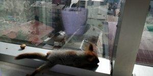 Vatandaşların bulduğu sincap yavrularını şırıngayla besliyor