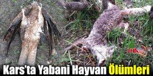 Kars'ta Yabani Hayvan Ölümleri