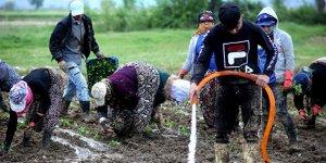 Çiftçiler Cumhurbaşkanı Erdoğan için üretecek