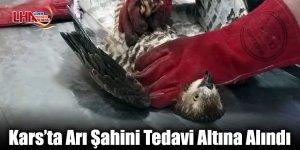 Kars'ta Arı Şahini Tedavi Altına Alındı
