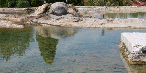 Dünyaca ünlü kırmızı su, artık kurbağa yavrularının
