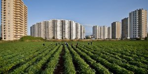 Sürdürülebilir tarım için ekim nöbeti sistemi doğru uygulanmalı
