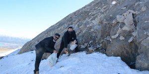 Kış uykusundan uyanan ayılar için Nemrut Dağı'na yiyecek bırakıldı
