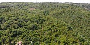 Korona virüs nedeniyle ormanlar boş kaldı