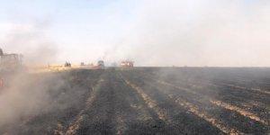 Mardin'de 200 dönüm ekili alan kül oldu
